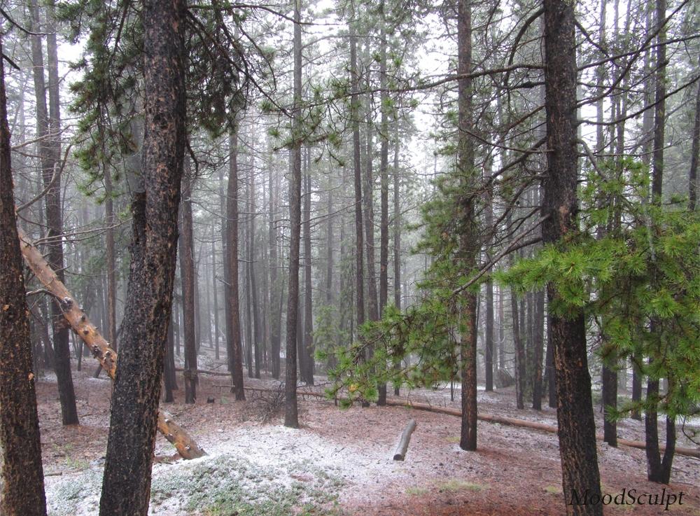 Colorado Foothills
