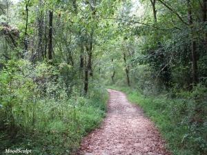 Ijams trail