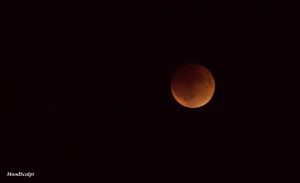 Blood Moon 9